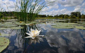 Picture FOREST, The SKY, WHITE, REFLECTION, SURFACE, SHORE, POND, LAKE, LILY, The REEDS