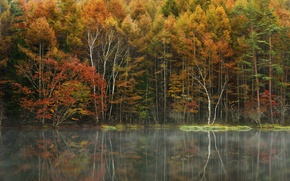 Picture autumn, forest, trees, fog, lake, reflection