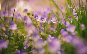 Picture grass, flowers, nature, plants
