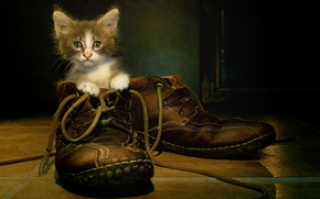 Picture cat, background, shoes