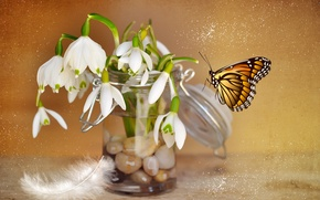 Picture flowers, stones, pen, collage, butterfly, snowdrops, Bank