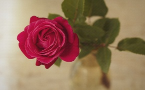 Picture leaves, rose, texture, petals, Bud, canvas