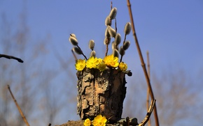 Picture the sky, flowers, branches, nature, spring, bark, Verba, tuesok