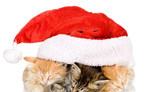Picture BACKGROUND, WHITE, YEAR, TRIO, RED, KITTENS, NEW, HAT