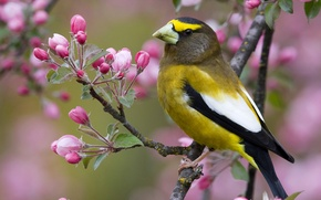 Picture flowers, branch, bird, nature, beak, spring