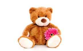 Picture flower, toy, bear, plush, toy, bear, cute, Teddy