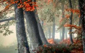 Picture autumn, forest, trees