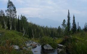 Picture forest, mountains, stream, contour, birch, Siberia
