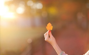 Picture girl, background, Wallpaper, mood, hand, blur, leaf, wallpaper, leaf, widescreen, background, full screen, HD wallpapers, …