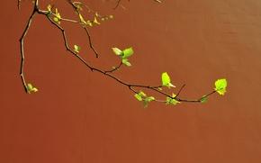 Wallpaper wall, branch, spring