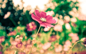 Picture flowers, focus, beauty, Park, widescreen Wallpaper, widescreen Wallpaper, blur, leaves, freshness, greens, mood, flowering, silence, ...