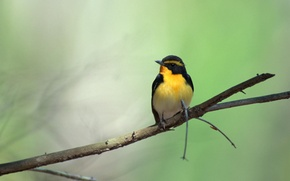Picture bird, branch, green