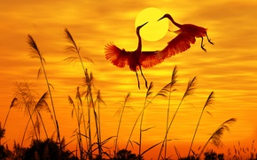 Picture birds, birds, sunlight, sunlight, sunset sky, sunset sky, flying birds, flying birds