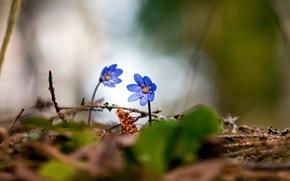 Picture forest, spring, violet