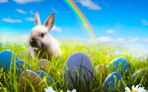 Picture the sky, grass, flowers, chamomile, eggs, rainbow, spring, rabbit, meadow, Easter, rainbow, grass, sunshine, rabbit, ...