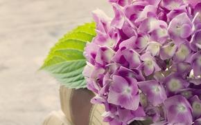 Picture books, hydrangea, inflorescence