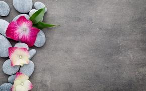 Wallpaper flowers, stones, flower, orchid, stones, spa, zen