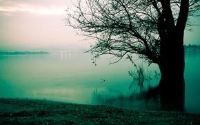 Picture fog, lake, tree, shore, morning