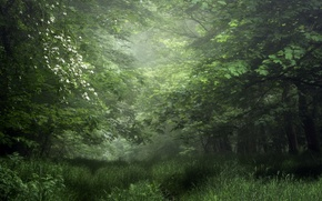 Picture greens, forest, summer