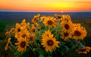 Picture the sky, the sun, clouds, flowers, Valley