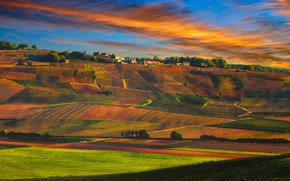 Picture sunset, France, village, Champagne, vineyards