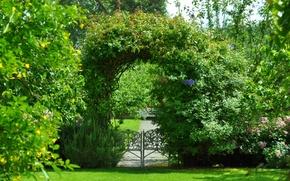 Picture greens, summer, Park, green, plants, garden, arch, summer, Nature, park, garden