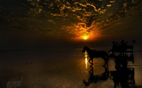 Picture shore, horse, Sunset, wagon