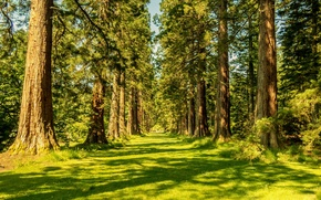 Picture forest, summer, trees, nature