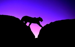 Wallpaper cat, leopard, silhouette, Panther, the sky, sunset