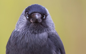 Picture background, bird, Eye contact