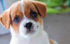 Picture portrait, dog, muzzle, puppy