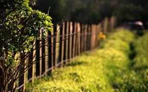 Picture greens, grass, leaves, the sun, macro, trees, branches, nature, background, tree, Wallpaper, the fence, blur, …