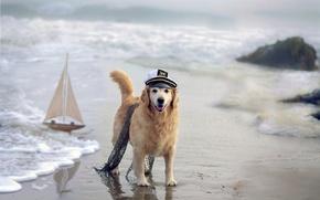 Picture sea, dog, boat