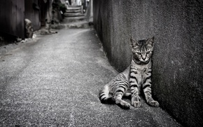 Picture cat, loneliness, street