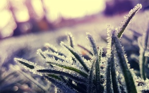 Picture cold, frost, grass, crystals