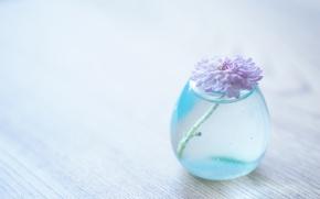 Picture flower, water, background, transparent, vase, chrysanthemum