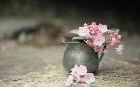 Picture flowers, background, vase