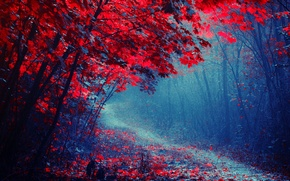 Picture road, autumn, forest, trees, fog, Park, path, the crimson