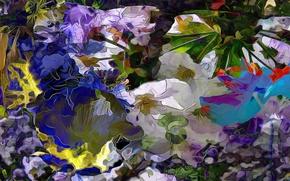 Picture flowers, nature, plant, petals, meadow