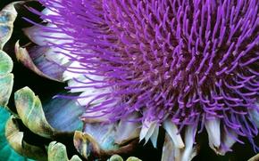 Picture flower, plant, windows 7, seven