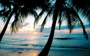 Wallpaper sunset, palm trees, the ocean, Barbados, Caribbean, West Indies, king\'s Beach, the island of Barbados