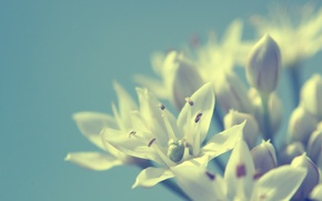 Picture macro, flowers, background, white
