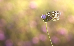 Picture butterfly, plant, insect, bokeh, blurred background, Wallpaper from lolita777