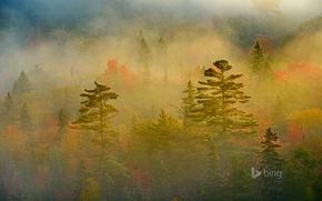Picture autumn, forest, fog, Canada, Ontario, Lake Superior Provincial Park