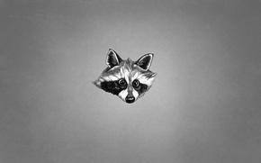Wallpaper minimalism, animal, raccoon, black and white, face, raccoon