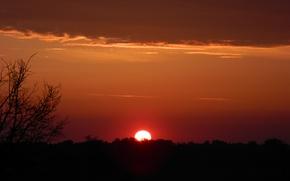 Picture cloud, tree, sunrise