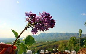 Picture flower, the sky, landscape, mountains, nature, hills, hand, beautiful, lilac, Uzbekistan, Chimgan
