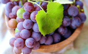 Picture leaves, macro, berries, green, grapes, bunches