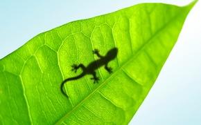 Wallpaper sheet, lizard, Lucky Gecko