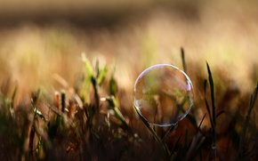 Picture summer, grass, macro, light, nature, photo, background, Wallpaper, shadow, plants, bubble, wallpapers, soap